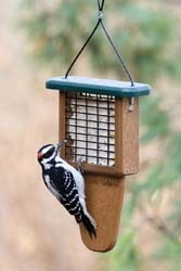 Tail-prop Suet Feeder
