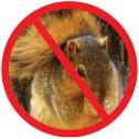 No squirrel